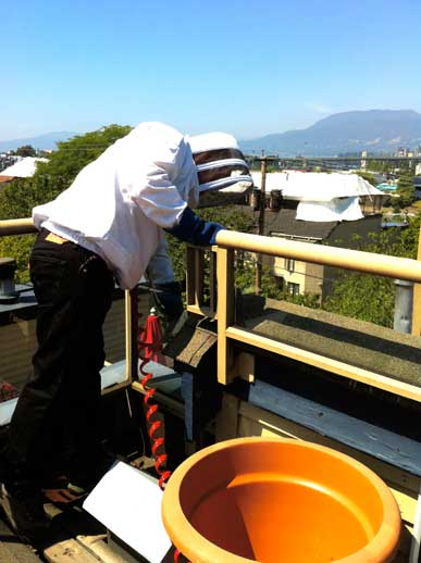 North Vancouver Pest Control Wasp Removal